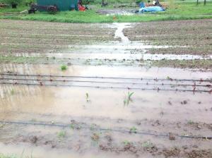 Flooding field