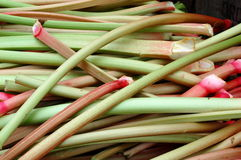 fresh-rhubarb-19505068