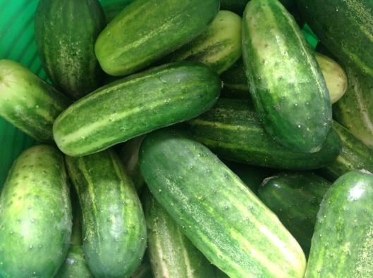 Cucumber week!