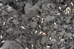 seed on soil