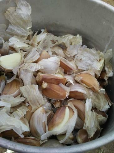 Garlic Seed 2