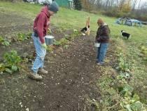Placing Seed