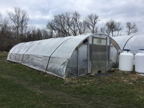4/13 seedling hoophouse
