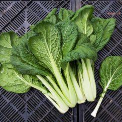 Asian Green vitamin gren Tat Soi