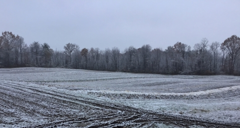 main field Nov 13, 2018