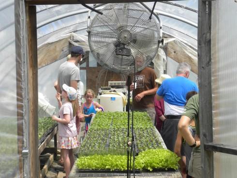 farm tour-seedling house